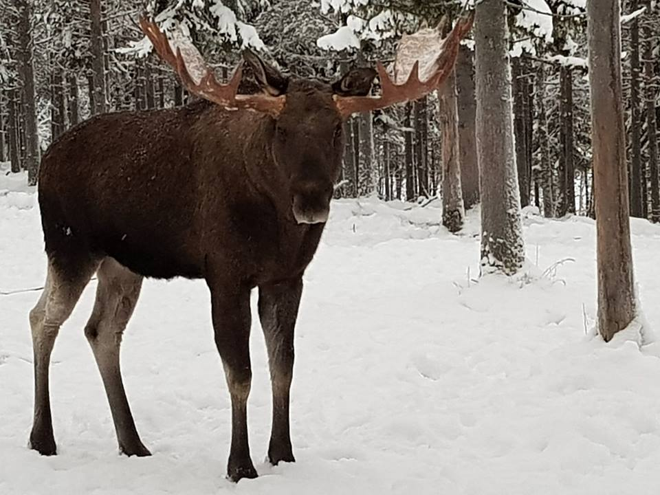 Accessible holidays in Swedish Lapland