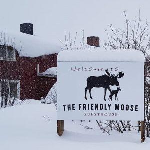 snowy Friendly Moose trimmed