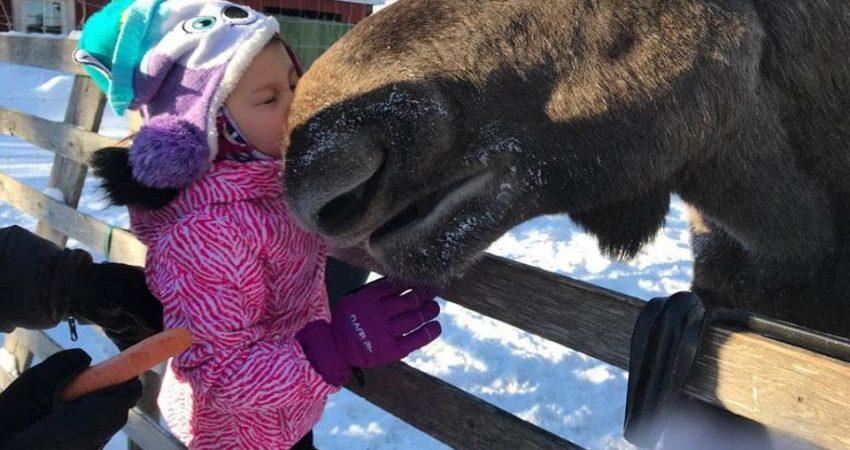 Visit Moose at The Arctic Moose Farm