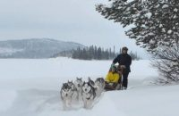 Husky rides for people of all abilities and disabilities